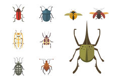 Set of insects flat style vector design icons. Collection nature beetle and zoology cartoon illustration. Royalty Free Stock Image