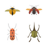 Set of insects flat style vector design icons. Collection nature beetle and zoology cartoon illustration. Bug icon Stock Image