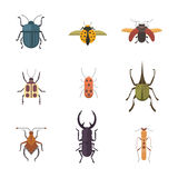 Set of insects flat style vector design icons. Collection nature beetle and zoology cartoon illustration Royalty Free Stock Images