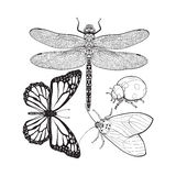 Set of insects like dragonfly, butterfly, ladybird and moth Stock Photos