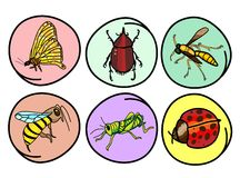 A Set of Insects on Round Background Royalty Free Stock Photography