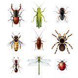 Set of insects on white background Stock Photos