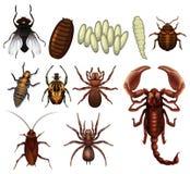 Set insekt ilustracji