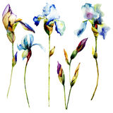 Set of Iris flower Stock Images