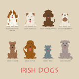Set of irish dogs Stock Image