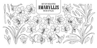 Set of isolated Amaryllis or Hippeastrum in 44 styles. Cute hand drawn flower vector illustration in black outline and white plane. On white background Royalty Free Stock Photo