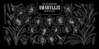 Set of isolated Amaryllis or Hippeastrum in 44 styles. Cute hand drawn flower vector illustration only white outline on black back. Ground Stock Images