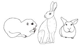 Set of isolated animals. Rodent. Gopher, hare, rabbit. vector illustration
