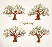 Set of argania or argan fruit trees with leaves Stock Photos