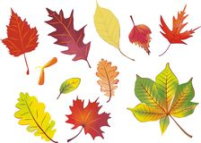 Set of isolated autumn leaves. In aquarelle colors Royalty Free Stock Photos
