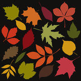 Set of isolated autumn leaves Royalty Free Stock Images
