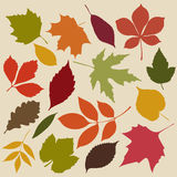 Set of isolated autumn leaves Stock Photography