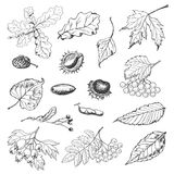 Set of isolated Autumn leaves, seeds and berries Royalty Free Stock Images