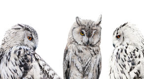 Set of isolated black and white owls Royalty Free Stock Photos