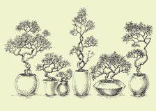 A set of isolated bonsai trees Stock Photo
