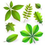 Set of isolated bright green summer isolated leaves. Elements of trees. Vector stock illustration
