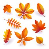 Set of isolated bright orange autumn fallen leaves. Elements of fall foliage. Vector. Set of isolated bright orange autumn fallen leaves. Elements of fall royalty free illustration