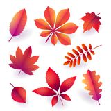 Set of isolated bright red autumn fallen leaves. Elements of fall foliage. Vector stock illustration
