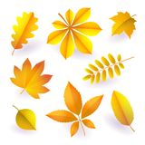 Set of isolated bright yellow autumn fallen leaves. Elements of fall foliage. Vector royalty free illustration