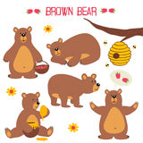 Set of isolated brown bear. Vector illustration, eps Royalty Free Stock Images