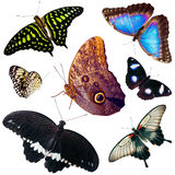 Set of isolated butterflies Stock Photography