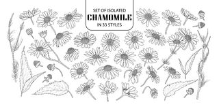 Set of isolated chamomile in 33 styles. Royalty Free Stock Image