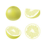 Set of isolated colored yellow pomelo, half, slice, circle and whole juicy fruit on white background. Realistic citrus collection. vector illustration
