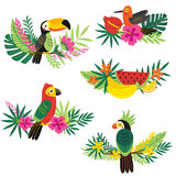 Set of isolated decorative tropical design Stock Images