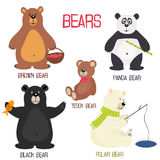 Set of isolated different bears Royalty Free Stock Image