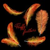 Fire feathers fire bird isolated on a black background. Easy style, can be used in flyers, banners, a web. Elements for design. Set of isolated falling white Royalty Free Stock Photo