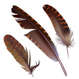 Set of isolated feathers on white background Royalty Free Stock Images