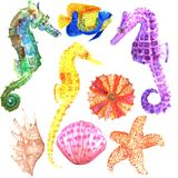 Set of isolated fishes, seashells. Watercolor. royalty free illustration