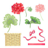 Set of isolated flowers and geranium leaves, baskets and bows. Set of flowers and geranium leaves, wicker baskets, ribbons and bows isolated on white background Royalty Free Stock Photo