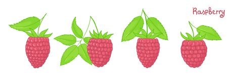 Set of isolated forest berries. Pink raspberries with leaves. Illustration Royalty Free Stock Photo