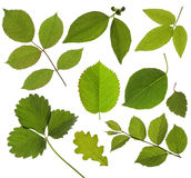 Set isolated green leaf royalty free stock photos