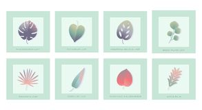 Set of isolated green leaves with shadow. Palm and flower spring plants sign, done in gradient pastel tone. Herbal collection Stock Photography