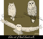 Set of isolated hand-drawn owls 2. Stock Photos