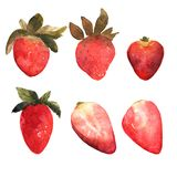 Set of isolated hand drawn red strawberry.  Berries and strawber. Set of isolated hand drawn red strawberry.  Illustrarion with berries and strawberry slices in Royalty Free Stock Photo