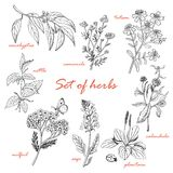 Set of isolated herbs in sketch style. Vector illustration for your design Royalty Free Stock Photos