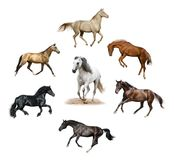 Set of isolated horses Stock Photography