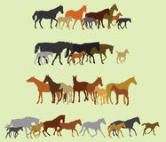 Set of isolated horses and foals silhouettes Royalty Free Stock Photography