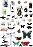 Set of isolated insects with shadows Stock Images
