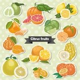 Set of isolated label citrus fruits Royalty Free Stock Photos