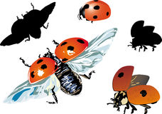 Set of isolated ladybugs Royalty Free Stock Image