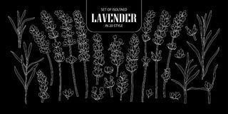 Set of isolated Lavender in 20 styles. Cute hand drawn flower ve Stock Photo