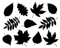 Set of isolated leaves and branches silhouettes Stock Photography