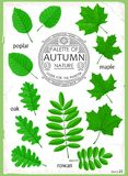 Set of isolated leaves Royalty Free Stock Photos