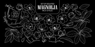 Set of isolated magnolia in 21 styles. Cute hand drawn flower vector illustration only white outline. Stock Photography