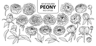 Set of isolated peony in 21 styles. Cute hand drawn flower vector illustration in black outline and white plane. stock image