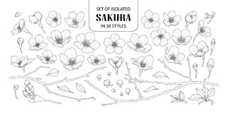 Set of isolated sakura in 38 styles. Cute hand drawn flower vector illustration in black outline and white plane on white background Stock Photography